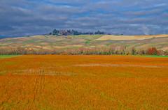 toscana 14 (lotti roberto) Tags: montegemoli toscana tuscany countryside campagna clouds autunno autumn color italy italia