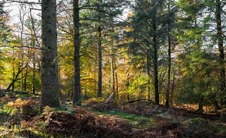 Woodland - Early November_NK2_3227