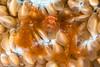 APL_161226_0652_Bunaken (alanpl) Tags: bunaken indonesia northsulawesi tasikria uw xmas16
