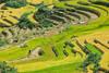 _J5K9062.1011.Dế Su Phình.Mù Cang Chải.Yên Bái (hoanglongphoto) Tags: asia asian vietnam northvietnam northwestvietnam landscape scenery vietnamlandscape vietnamscenery vietnamscene terraces terracedfields terracedfieldsinvietnam harvest canon canoneos1dsmarkiii tâybắc yênbái mùcangchải lapántẩn phongcảnh ruộngbậcthang ruộngbậcthangmùcangchải lúachín mùagặt mùagặtmùcangchải canonef100400mmf4556lisusmlens