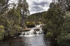 Dove River, Tasmania (Steven Penton) Tags: tasmania australia cradle mountain