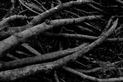 DESTRUCTION (paulrichardschulte) Tags: art photoart photoartist photoartwork blackandwhite bw woods forest branches destruction destroyed trees tree leafs contrasts lightanddark paulrichardschulte