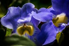 Flores de Petrópolis (lenpereira) Tags: flores flowers macro bright petrópolis d7200
