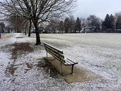 Follow the Path (David J. Greer) Tags: vancouver bc connaught park morning winter snow path bench tree trees grass white landscape outdoor
