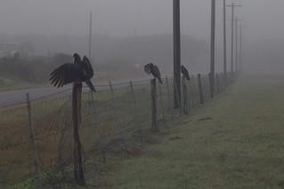 Foggy Fence Friday
