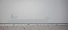 Assembly Line (gseloff) Tags: americanwhitepelican bird wildlife tanker ship fog galvestonshipchannel bolivarflatsshorebirdsanctuary houstonaudubonsociety northjetty texas gseloff