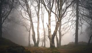Misty morning at Holme Fell