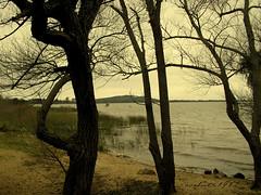 repito (corbata1982) Tags: trees tree rio brasil river lafotodelasemana portoalegre rbol poa rs guaba rvores corbata1982 lfscontraluces