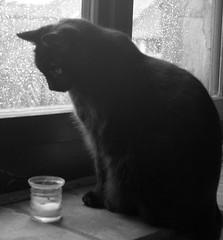 Cat 'n Candle (doozzle) Tags: morning bw 15fav cats black blur window rain topv111 statue 510fav cat blackcat drops still topv333 feline chat waterdrop soft candles glow candle 2006 snap drop top20catpix february waterdrops 110fav chatnoir blackandwhote utatafeature