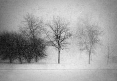 Snow Storm (Todd Klassy) Tags: snow storm whiteout tree madison wisconsin wi blizzard winter blackandwhite black white elver park texture noise flakes grain blur danecounty art landscape beautiful sky light artistry vision design classic outdoors stockphotography fineart royaltyfree winterscene nonurbanscene horizontal winterweather snowstorm winterlandscape blurry rurallife inasnowstorm roadconditions silhouette wintersky mothernature fallingsnow abstract beautyinnature thundersnow delicate atmosphere foliage leafless winterseason christmasseason hibernation dormant sleeping dreamlike surreal highkey contrast branches twigs trunk winterstormstories calendarphoto southern snowy obscured snowyweather winterinmadison winterinwisconsin wisconsinlandscape