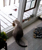 Yummmmmm! (MsPixie) Tags: windows cats snow cold birds catsandwindows