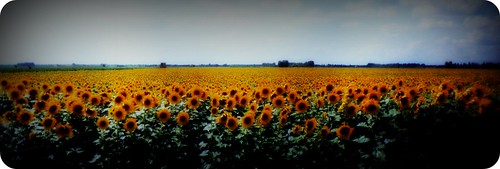 "sunflower fields of france • <a style=""font-size:0.8em;"" href=""http://www.flickr.com/photos/71572571@N00/101486178/"" target=""_blank"">View on Flickr</a>"