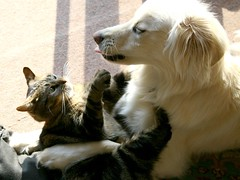 Just a little kiss please! (Padrone) Tags: dog pets cat play clem miesha