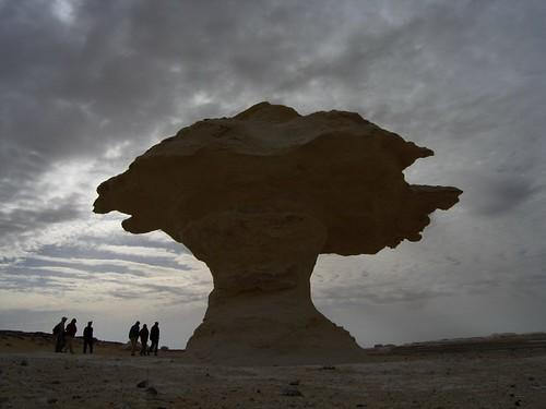 Le champignon géant