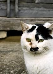 _m2788 (Masakazu Ikeguchi) Tags: cat straycat