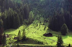 W górach - In Mountains - Gossausee Salzkamergut (arjuna_zbycho) Tags: summer mountains green grass forest searchthebest natur topv999 dachstein mywinners salzkamergut gossausee