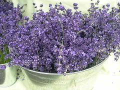 Lavender (chavala) Tags: flowers nature lavender