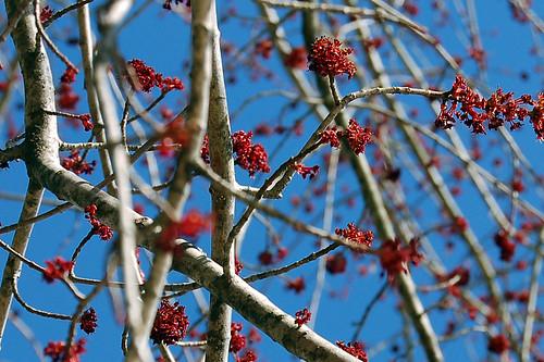 Tree Branches 4 by LynGi.