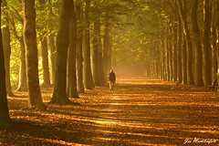 Morning walk (Jos Mecklenfeld) Tags: road forest bravo flickr min