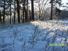 Snow Forest at Ground Level (hscsusiq) Tags: mar end 06 winters