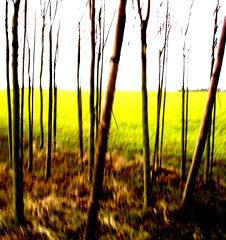 flanders field (kiplingflu) Tags: trees brown green colors field yellow ilovenature sticks belgium mtb flanders