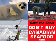 Stop the Seal Hunt (Dave Ward Photography) Tags: 2005 baby snow canada cold ice club politics innocent arctic snagged seal murder seals hunter pup activism brutality hunt cruel davewardsmaragd