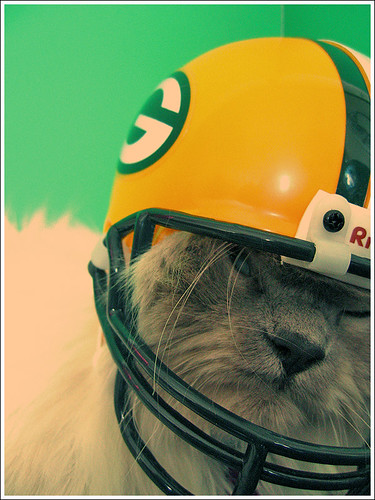 packer cat