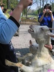 IMG_0030 (Havi Photo) Tags: zoo zoo shanghai  shz