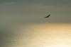 Buitre en el estrecho (Cositos :)) Tags: buitres volture bolonia estrecho de gibraltar san bartolo nikon d3300 18105 aves
