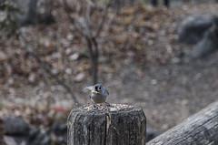 _DSC4428 (purin_cess) Tags: centralpark 2016 autumn 11月 十一月 秋 中央公園 紐約 ny newyork