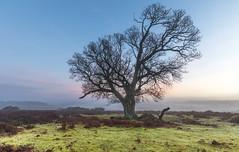 Winter Break (nicklucas2) Tags: landscape grass newforest tree mist bracken silhouette