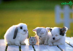 Puppy, Kitten, Bunny and Mouse
