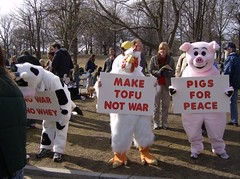 Animals protest the war