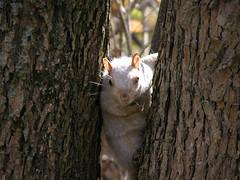 Parc_Oct_05 (31) (Richard P.) Tags: cureuil albinos