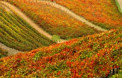 Autumn (PauloSantos) Tags: travel red orange portugal colors autumncolors 500v50f douro 50100fav turismo viagens outono nordeste riodouro vinhodoporto portowine 1111v11f interestingness73 i500 1000v40f 1250v f81