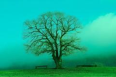 Avrebbe potuto essere una bella giornata (It could have been a lovely day) (Gianni Dominici) Tags: 2005 sky italy rome roma tree topf25 topv111 canon landscape 350d topv333 italia 100v10f topv222 dicember pratoni 4giannid 4elementiterra 4egiannid