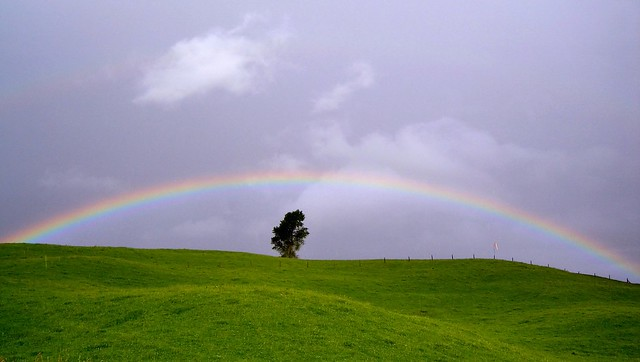 one tree rainbow
