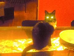 alex, devil kitten