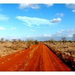 T_rex Road