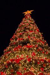 Christmas Tree, Syntagma (RobW_) Tags: 2005 christmas december walk athens greece christmaseve dec2005 koukaki zappeion syntagma ermou 24dec2005