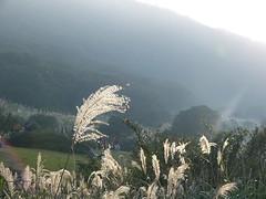 P1040092 (utt) Tags: yanming mountain