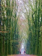 Eerst (first) (Harry Mijland) Tags: trees holland tree netherlands dutch forest interestingness bomen utrecht hiking nederland thenetherlands boom explore nl bilthoven debilt groenekan dearharry harrymijland