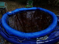 Wanna Take A Dip (mightyquinninwky) Tags: winter backyard kentucky january swimmingpool lexingtonky fayettecountyky trashy fontaineroad yardfurniture