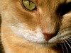 happy (marginscribbler) Tags: macho mister cat chat gato meow miao yellow