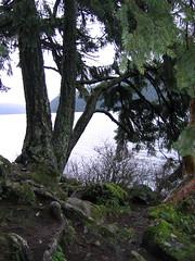 Trees and Moss at Crescent Lake (mamamusings) Tags: crescentlake tree moss