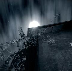 At a speed of moonlight. (mutbka) Tags: longexposure blackandwhite bw moon 6x6 tlr topf25 mediumformat square 500v20f nightshot topv777 800 yas