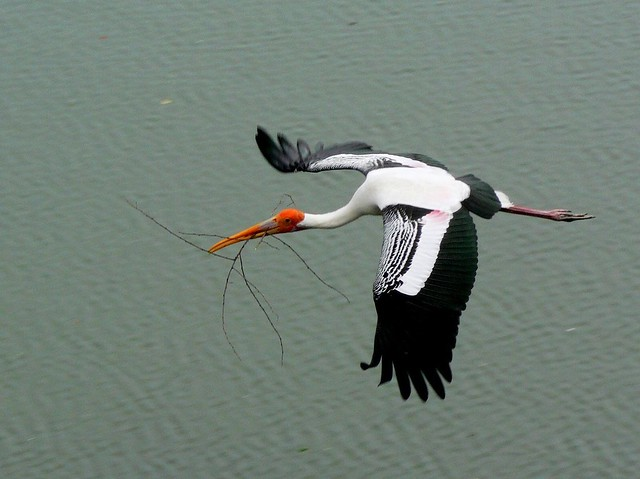 Stork Taking 1 of 5