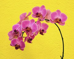A bunch of orchids - by Sergio Lubezky