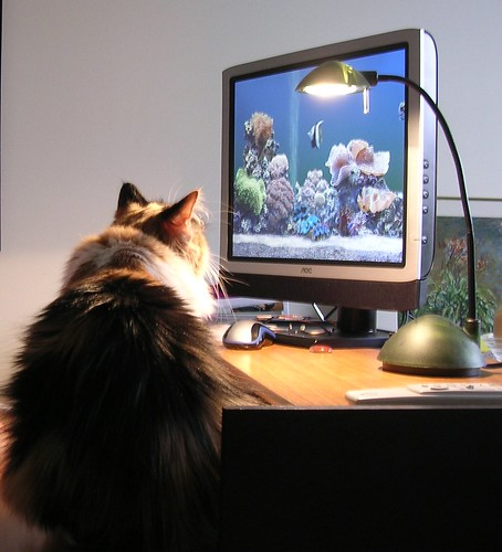 cats and computer technology efficiently