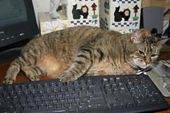 My computer helper (SuzanneR) Tags: cats cat computer feline tabby kitty kitties felines